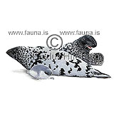 Hooded seal - Cystophora cristata - Seals - Pinnipedia
