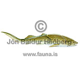Placoderm - Placodermi - otherfish - placodermi